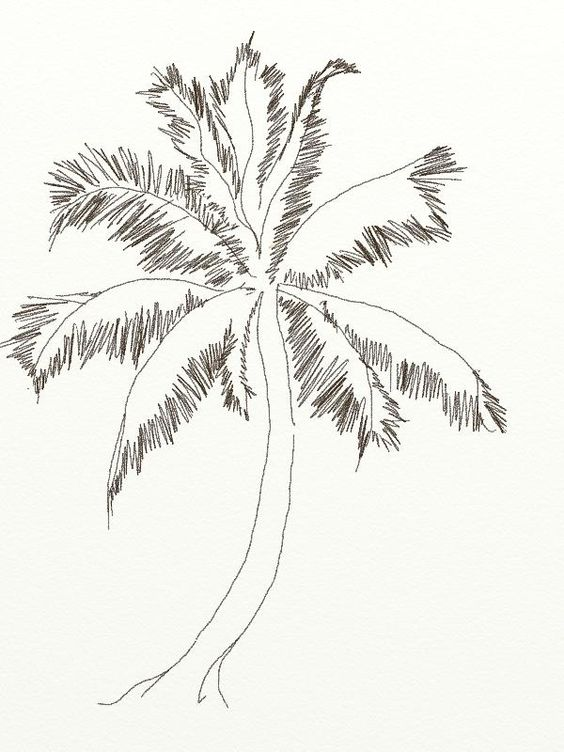 how to draw coconut tree draw pinterest drawings coconut tree Rainforest Structure Diagram how to draw coconut tree draw pinterest drawings coconut tree drawing and pencil drawings