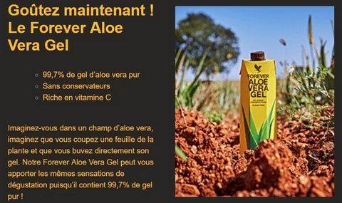 Aloe Vera Aloes Ou Plante Amer Aaaoeh