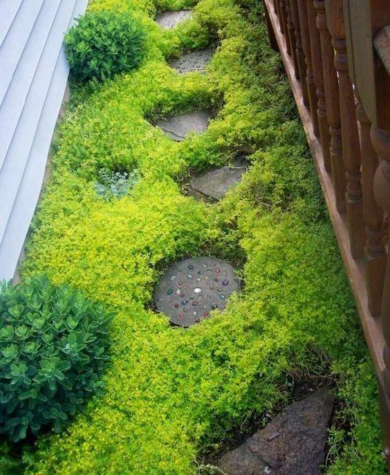 plantes couvre sol entre les dalles du pas japonais