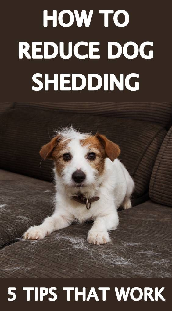 How To Remove Dog Hair From Your House Dog Hair Dog Shedding Deshedding Dog