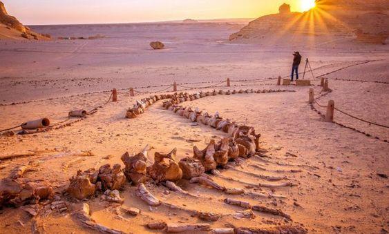 Er is een vallei van walvissen in het midden van de woestijn van Egypte en het is miljoenen jaren oud