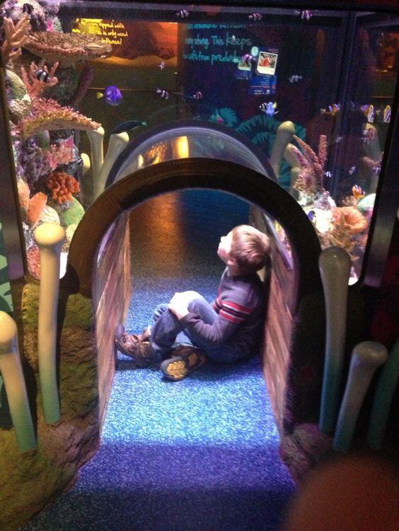 Kansas City Aquarium And Crown Center On Pinterest