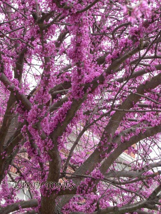 Trunks branches and pansies on pinterest - Flowers that grow on tree trunks ...