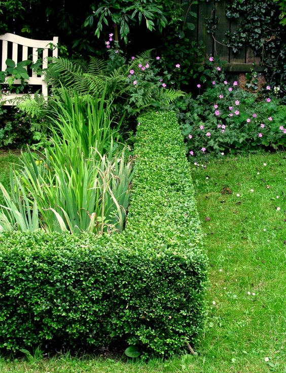 A box corner. I love the angles and geometry that box hedges give to even the most laid back garden style.