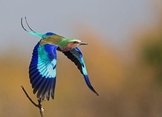 Jewel of the African Savannah Photo by Andre Botha — National Geographic Your Shot