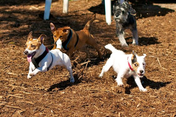 dogs in motion - who let the dogs out?