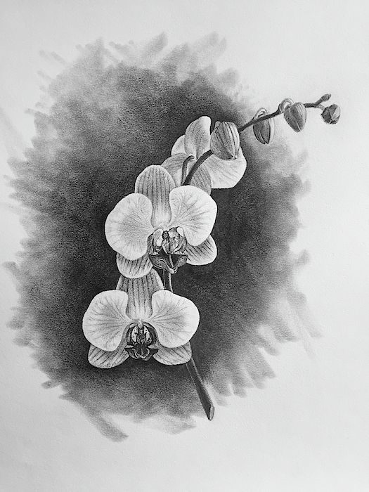 Orchid By Bill Finewood Orchid Drawing Flower Drawing Pencil Drawings Of Flowers