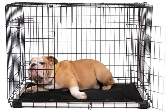 K9 Ballistics Crate Pads Offer The Perfect Solution To Dogs Who Love To Dig And Chew In Their Crates Our Pads Dog Crate Pads Indestructable Dog Bed Dog Crate
