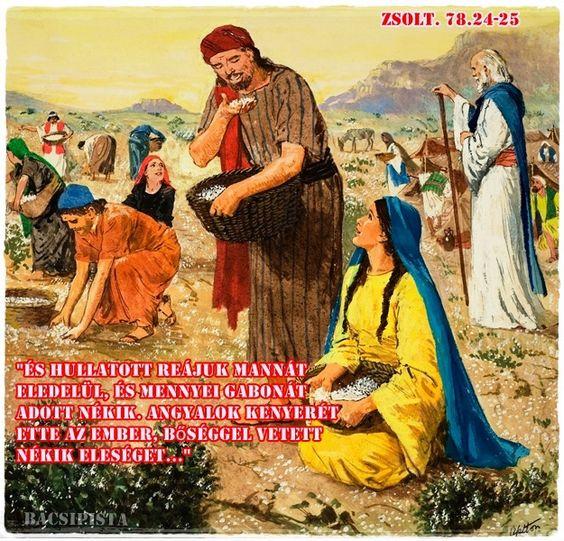 """""""És hullatott reájuk mannát eledelül, és mennyei gabonát adott nékik. Angyalok kenyerét ette az ember, bőséggel vetett nékik eleséget..."""" (Zsolt. 78.24-25)"""