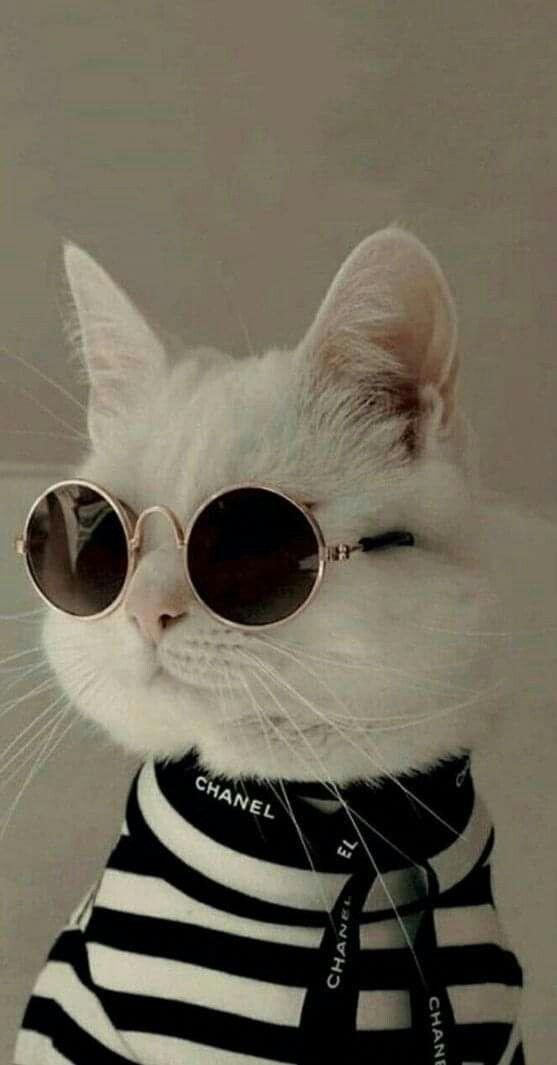 Wallpaper Kucing Lucu Dan Imut