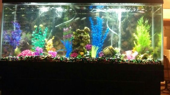 Awesome fish tank in my living room :)