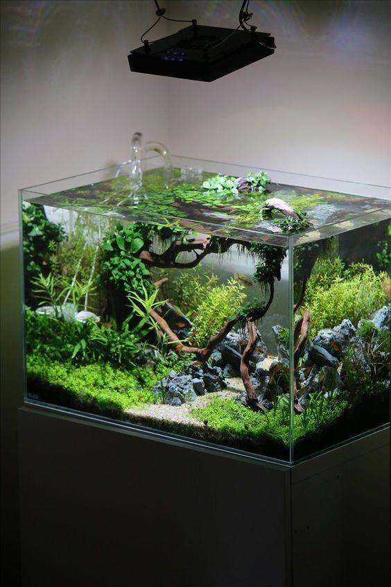 Aquascape Mini Aquarium Bulat