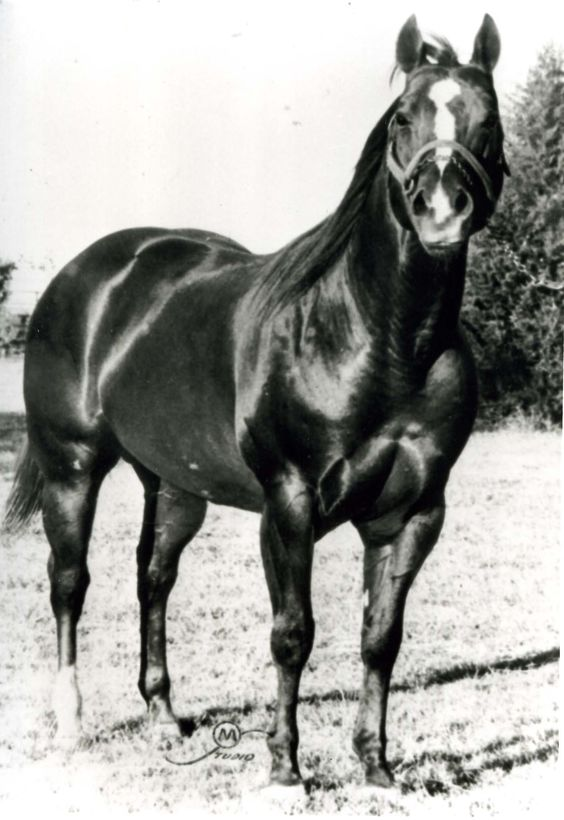 Sugar Bars' greatness did not come from burning up tracks or winning dozens or show ribbons, but rather from the horses he sired. Sugar Bar was inducted into the Hall of Fame in 1994. Learn more about the AQHA Hall of Fame inductees at http://aqha.com/en/Foundation/Museum/Hall-of-Fame/Hall-of-Fame-Inductees.aspx