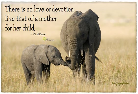 There is no love or devotion like that of a mother for her child. <3 More beautiful family quotes on Joy of Mom - please do drop by to visit! <3: