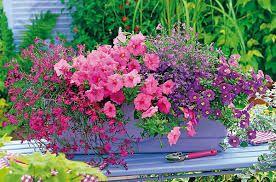 """Képtalálat a következőre: """"balkonláda növények"""""""
