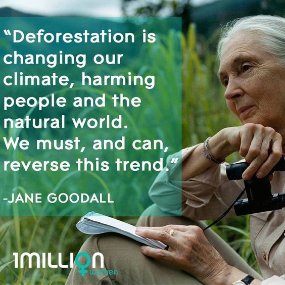 Deforestation, over-consumption and more. Ruining the planet and causing climate change