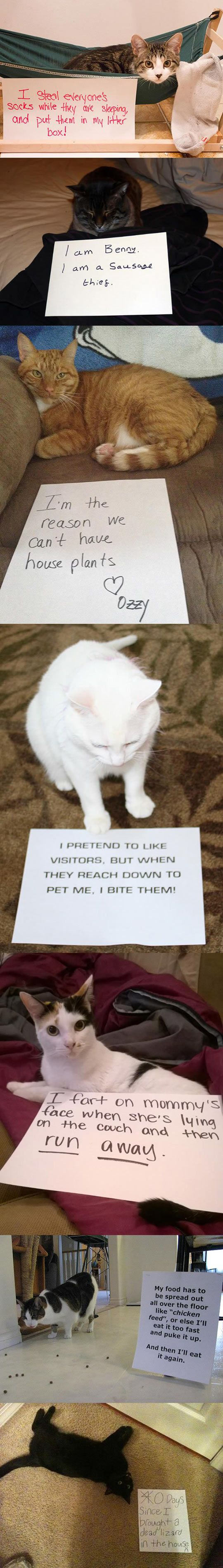 Gatos e suas confissões!