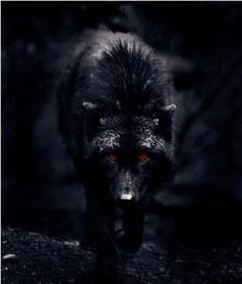Me he convertido en lobo que persigue su presa ahora deje ser un siervo ahora soy la bestia que busca la oscuridad de la noche