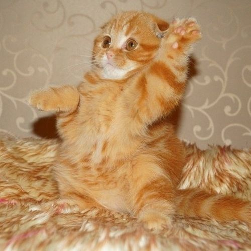 """Me! Me! I'm the cutest kitty in da world!!"""