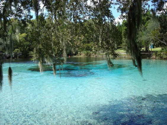 Silver Springs Florida is a beautiful place and the water really is this clear. It's like magic (AND Tarzan was filmed there). :)