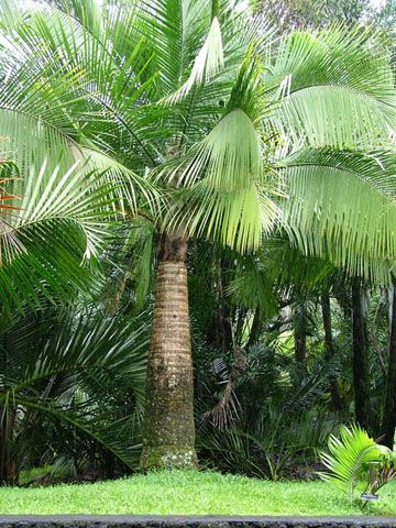 Majestic Palm Garden Design Ideas Pinterest Palms