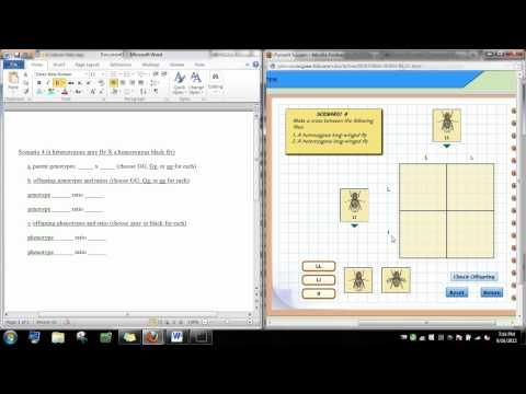 punnett square visual lab Virtual lab question home journal calculator help diagrams table audio  print punnett squares how can punnett squares help predict the traits of.
