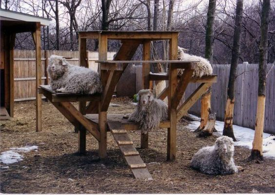 structures that keep confined goats active and alert  3goatvethttp://www.mcwalterconstruction.com/goatfort-50-09.JPG