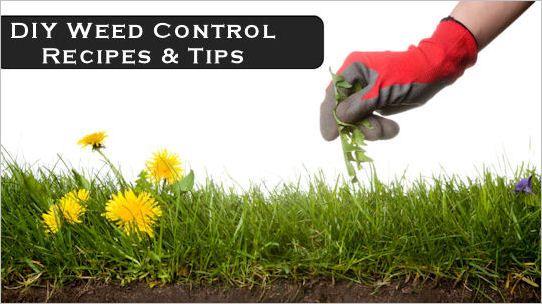 natural ways to control weeds