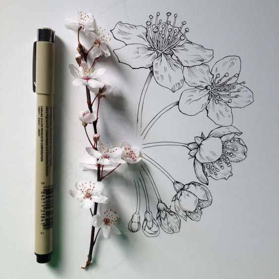 The art of botany: how to draw flowers, plants & nature better - Digital Arts