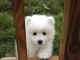 eskimo pup = squeezable