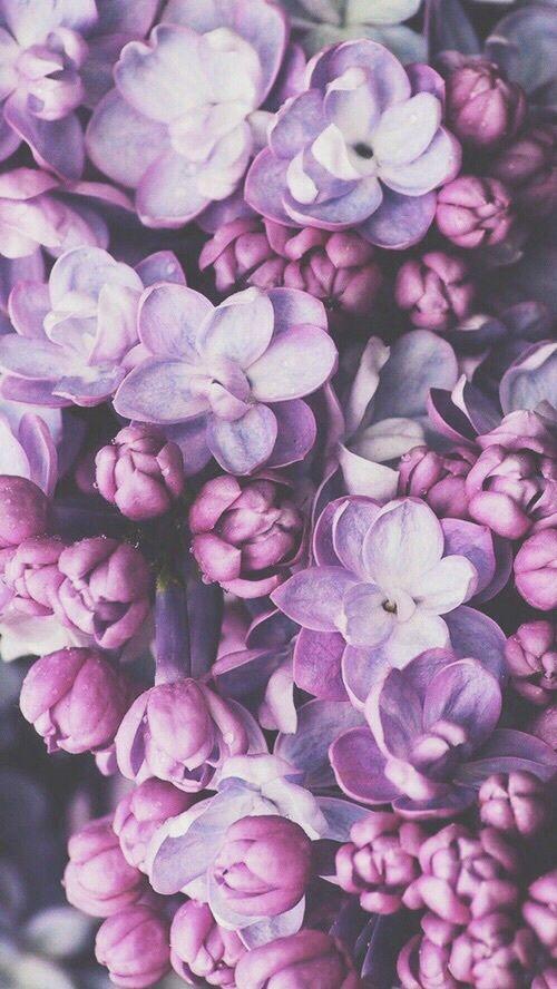 Aesthetic Flower Wallpaper Purple Flowers flowers petals neatly lined. aesthetic flower wallpaper purple