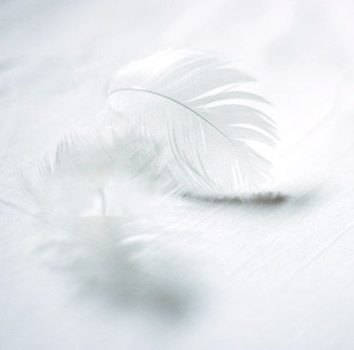 White feathers mean an angel is near~ ♥••*´¨`*•.☆• ¡ʇ! l ̲̅ə̲̅٨̲̅٥̲̅٦̲̅] ♥••*´¨`*•.☆•