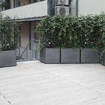 Jardiniere Image In Patine Zinc Lierre Grimpant Sur Treillis En