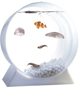 Jellyfish Tank - It's the first affordable aquarium designed specifically for jellyfish, with a special filter and it's as easy to maintain as a regular fish tank. Jellyfish can't go in a regular fish tank because they get sucked into the filtration intakes and liquefied.