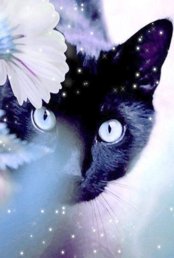 Interesting Beautiful Black Cats Images Magic Cat Cats Black Cat