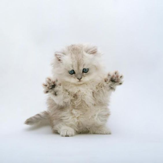 Put your paws in the air like you just don't care!!!