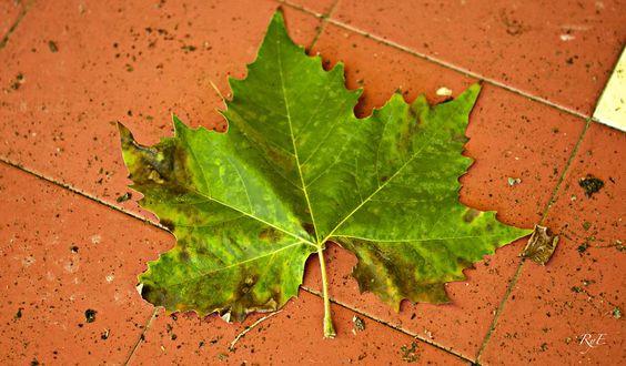 Green leaf by Ana Espin