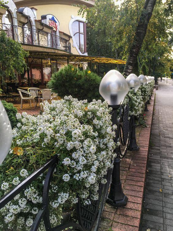 Осенние клумбы Светлогорска. Фото Жени Шведы