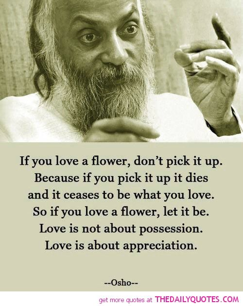 osho famous poets and a flower on pinterest