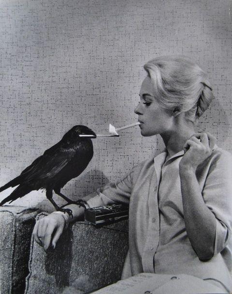 Tippi Hedren and raven between takes of The Birds. www.theprintlife.com