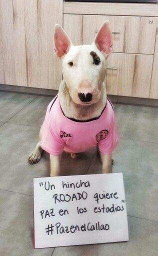 Este es un Hincha Rosado.