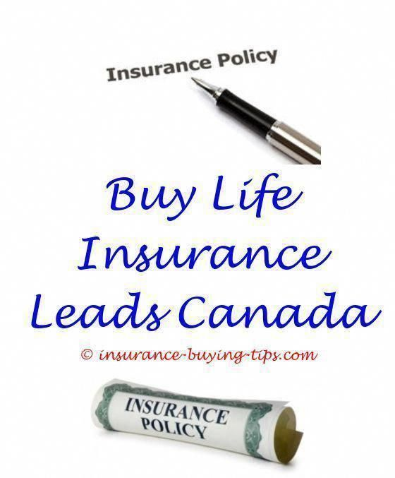 Can I Buy Insurance For My Dog How To Buy Insurance With Driver