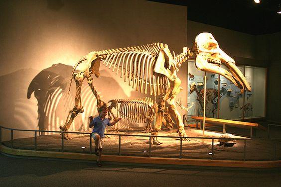 Denver Museum of Nature and Science - Denver, Colorado
