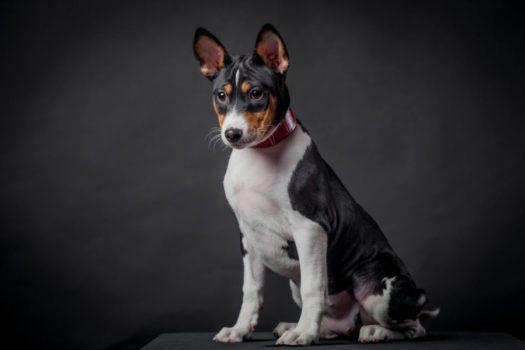 Pin On Medium Dog Breeds