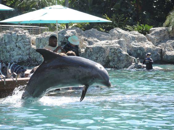 Dubai, Please Keep SeaWorld Out!