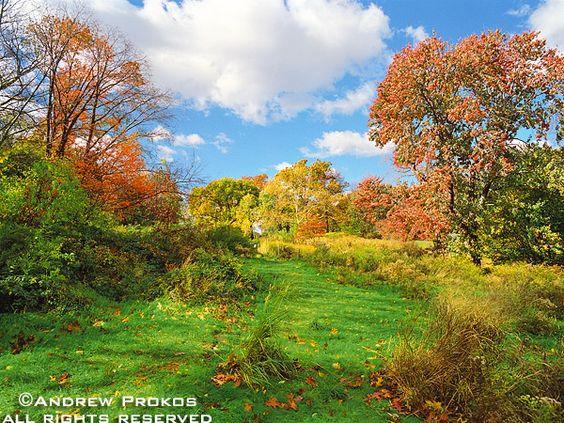 Central Park Meadow in Autumn - http://andrewprokos.com/photos/new-york/