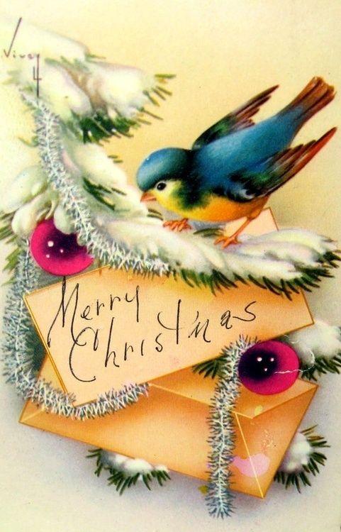 Merry Christmas blue bird card cover