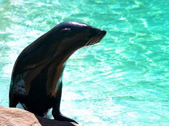 Shiny wet seal