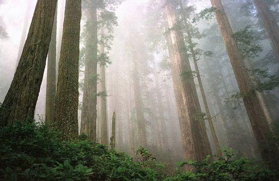 11 واقعیت درباره بلندترین درختان جهان