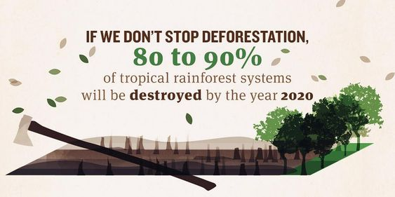 speech on deforestation in the amazon We will share with you some deforestation facts and statistics non-profit organizations like the world wildlife fund and amazon watch, are working hard to fight deforestation amazon deforestation: earth's heart and lungs dismembered greenpeace.